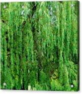 Green Tree View. Acrylic Print