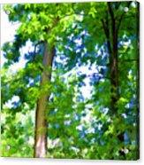 Green Trees 1 Acrylic Print
