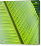 Green Tropical Leaves Acrylic Print