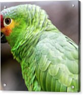Green Tropical Parrot, Side View. Acrylic Print