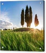 Green Tuscany Acrylic Print