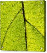Green Veins Acrylic Print