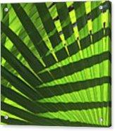 Green Weaver Acrylic Print