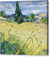 Green Wheatfield With Cypress Acrylic Print