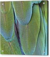 Green-winged Macaw #4 Acrylic Print