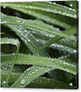 Green With Rain Drops Acrylic Print