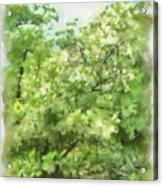 Greenstone Trail Acrylic Print