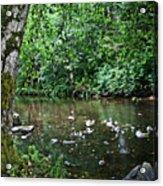 Greenwood Creek Acrylic Print
