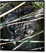 Greeting Card - Joe Joe In The Grass Acrylic Print