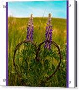 Greeting Card - Lupine Love Acrylic Print