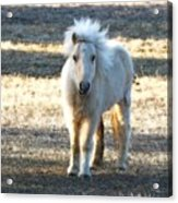 Greetings From A Hobbit Horse Acrylic Print