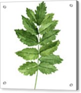 Gren Fern, Forest Plant Home Garden, Minimalist Abstract Poster Acrylic Print