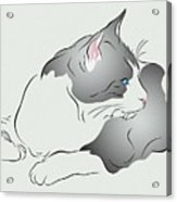 Grey And White Cat In Profile Graphic Acrylic Print