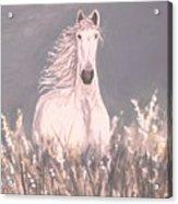 Grey And White Acrylic Print
