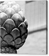 Grey Fruit 2 Acrylic Print
