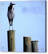 Grey Heron On A Pole Acrylic Print