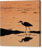 Grey Heron Sunset Acrylic Print