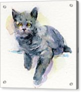 Grey Kitten Acrylic Print
