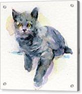 Grey Kitten Acrylic Print