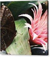 Grey Pansy Pink Bromeliad Acrylic Print