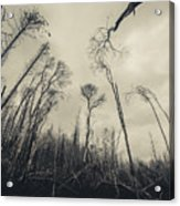 Grey Winds Bellow  Acrylic Print