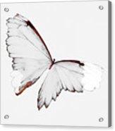 Grey Wings Acrylic Print