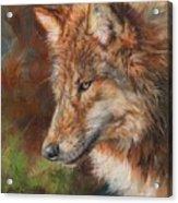 Grey Wolf Face Acrylic Print