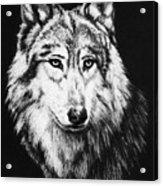Grey Wolf Acrylic Print by Melodye Whitaker