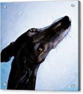 Greyhound - Always There Acrylic Print