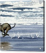 Greyhound At The Beach Acrylic Print