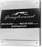 Greyhound Bus Sign Acrylic Print