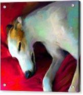 Greyhound Dog Portrait  Acrylic Print by Svetlana Novikova