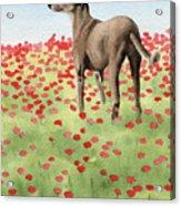 Greyhound In Poppies Acrylic Print