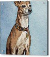 Greyhound Commission Painting By Irina Sztukowski Acrylic Print