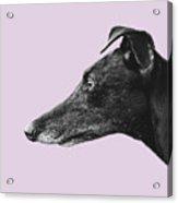Greyhound Profile Design Acrylic Print