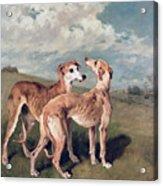 Greyhounds Acrylic Print