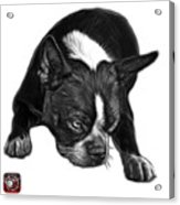 Greyscale Boston Terrier Art - 8384 - Wb Acrylic Print