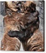 Grizzlies' Playtime 2 Acrylic Print