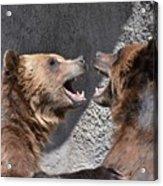 Grizzlies' Playtime 6 Acrylic Print