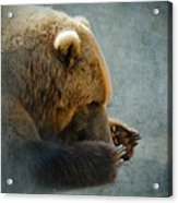 Grizzly Bear Lying Down Acrylic Print
