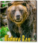 Grizzly Bear Nature Boy    Acrylic Print