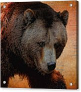 Grizzly Bear Painted Acrylic Print