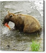 Grizzly Great Catch Acrylic Print