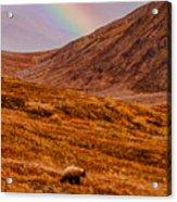 Grizzly Under The Rainbow Acrylic Print