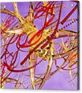 Groboto Experiment 1 Acrylic Print