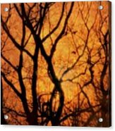 Groovy Sunshine Acrylic Print