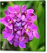 Ground Orchid Acrylic Print