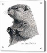 Groundhog Or Woodchuck Acrylic Print