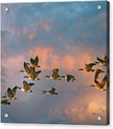 Group Flight Acrylic Print
