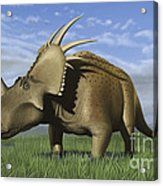 Group Of Dinosaurs Grazing In A Grassy Acrylic Print